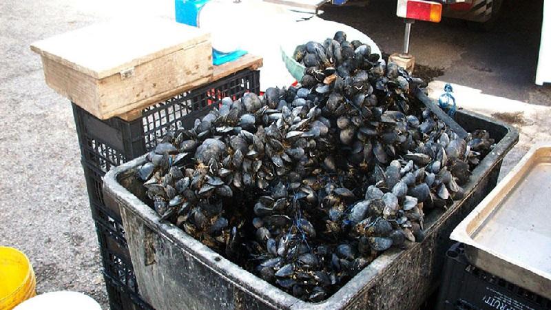 Vendita abusiva di mitili e frutti di mare: controlli e sequestri al Rione Toiano
