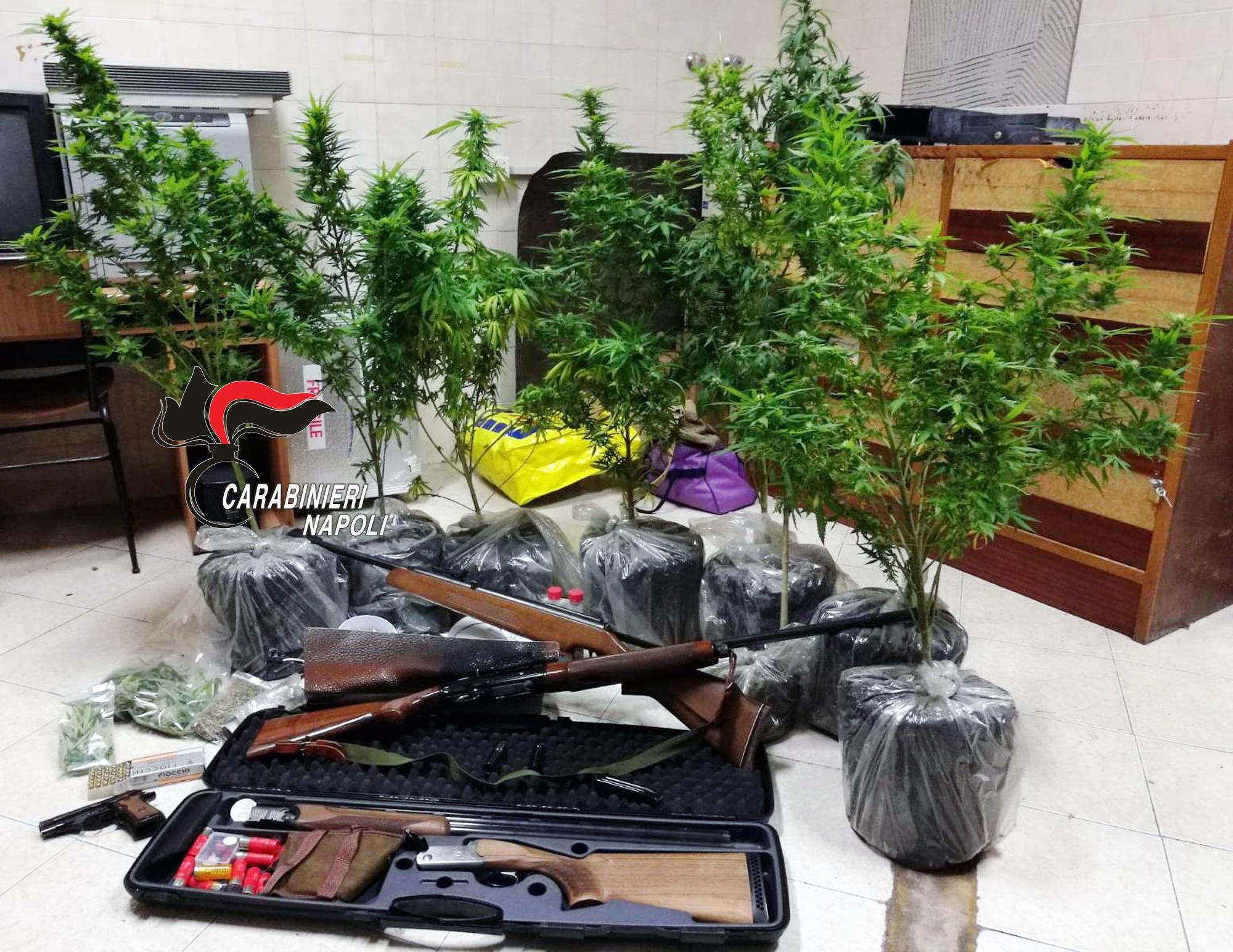Pozzuoli, famiglia denunciata per una coltivazione di 8 piante di cannabis