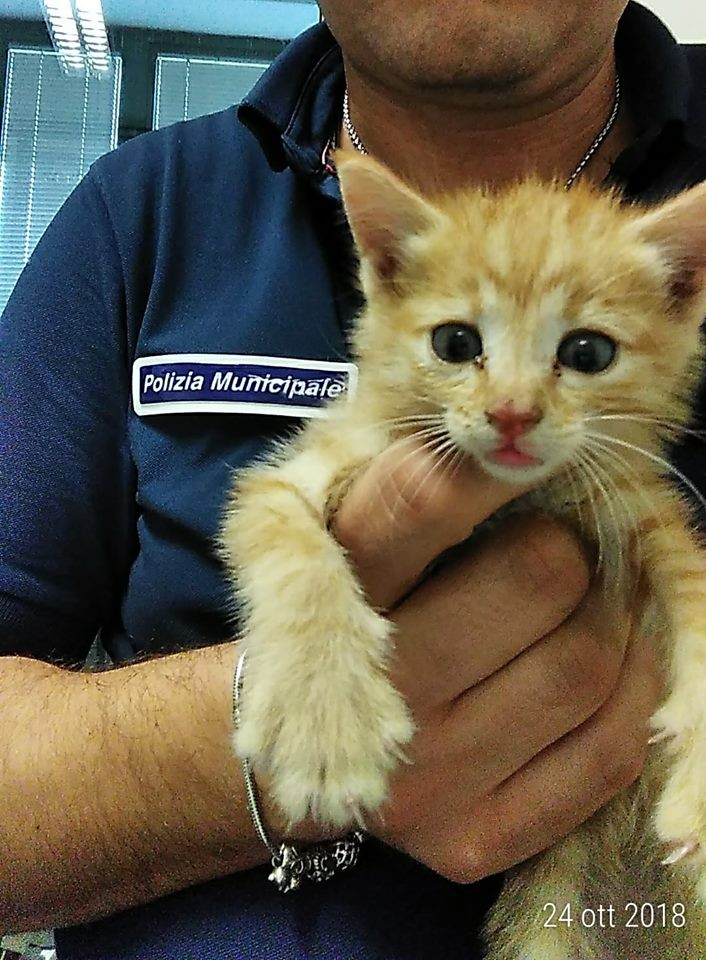 Quarto, la polizia municipale salva un gattino in difficoltà|Gallery