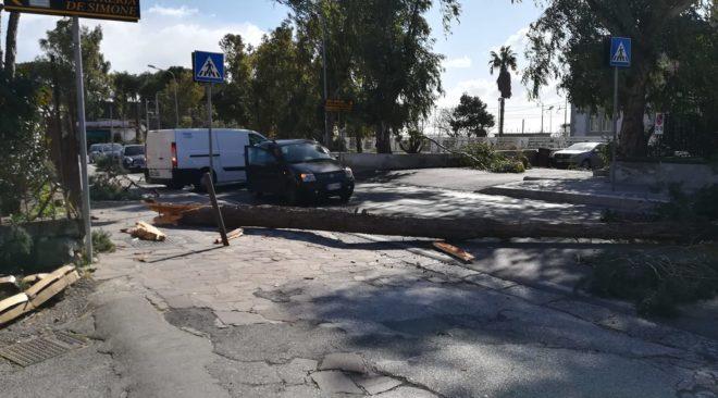 Maltempo, albero si abbatte su via Miliscola