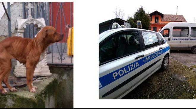 QUARTO/ Cani segregati e denutriti, denunciato il proprietario dai vigili urbani