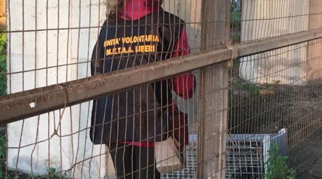 POZZUOLI/ Salvato un coniglio dai volontari all'uscita di Cuma della Tangenziale