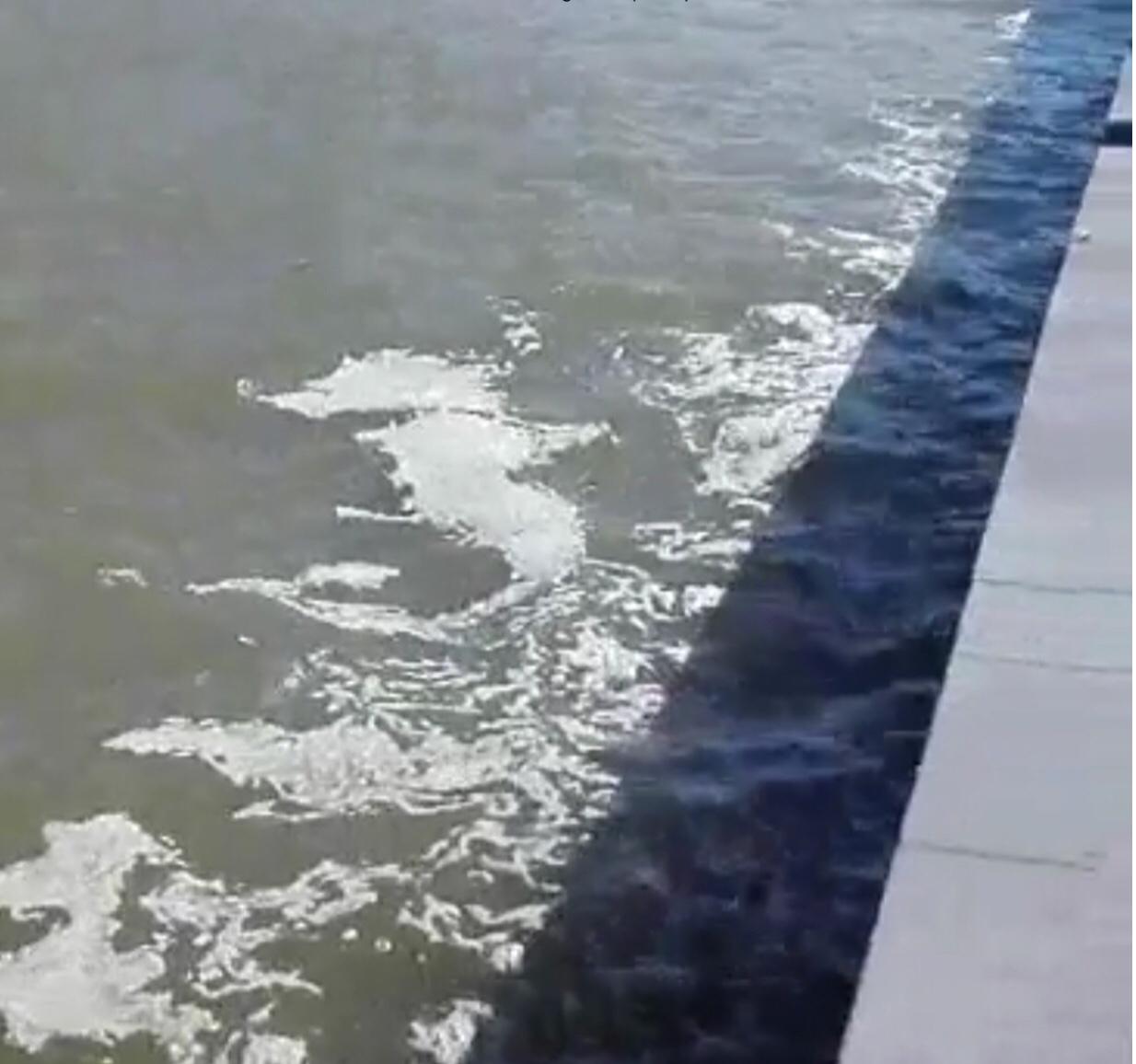 TORREGAVETA/ Chiazze marroni e puzza di fogna, così è il mare oggi