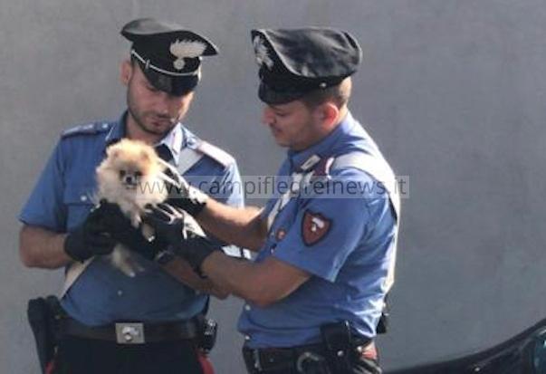 Ruba un cucciolo del valore di 2mila euro e lo nasconde nella borsa, arrestata una 39enne