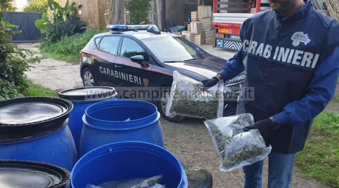 Cento chili di marijuana trovati in un terreno agricolo: arrestate due persone