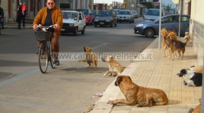 QUARTO/ Cani randagi aggrediscono uomo al Corso Italia, paura tra i residenti