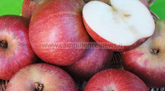 SCOPERTA/ La mela annurca è originaria del lago d'Averno, lo riportò Plinio Il Vecchio nel suo trattato