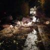 LICOLA/ Operai al lavoro per rimuovere il pino che si è abbattuto in via Grotta dell'Olmo - LE FOTO