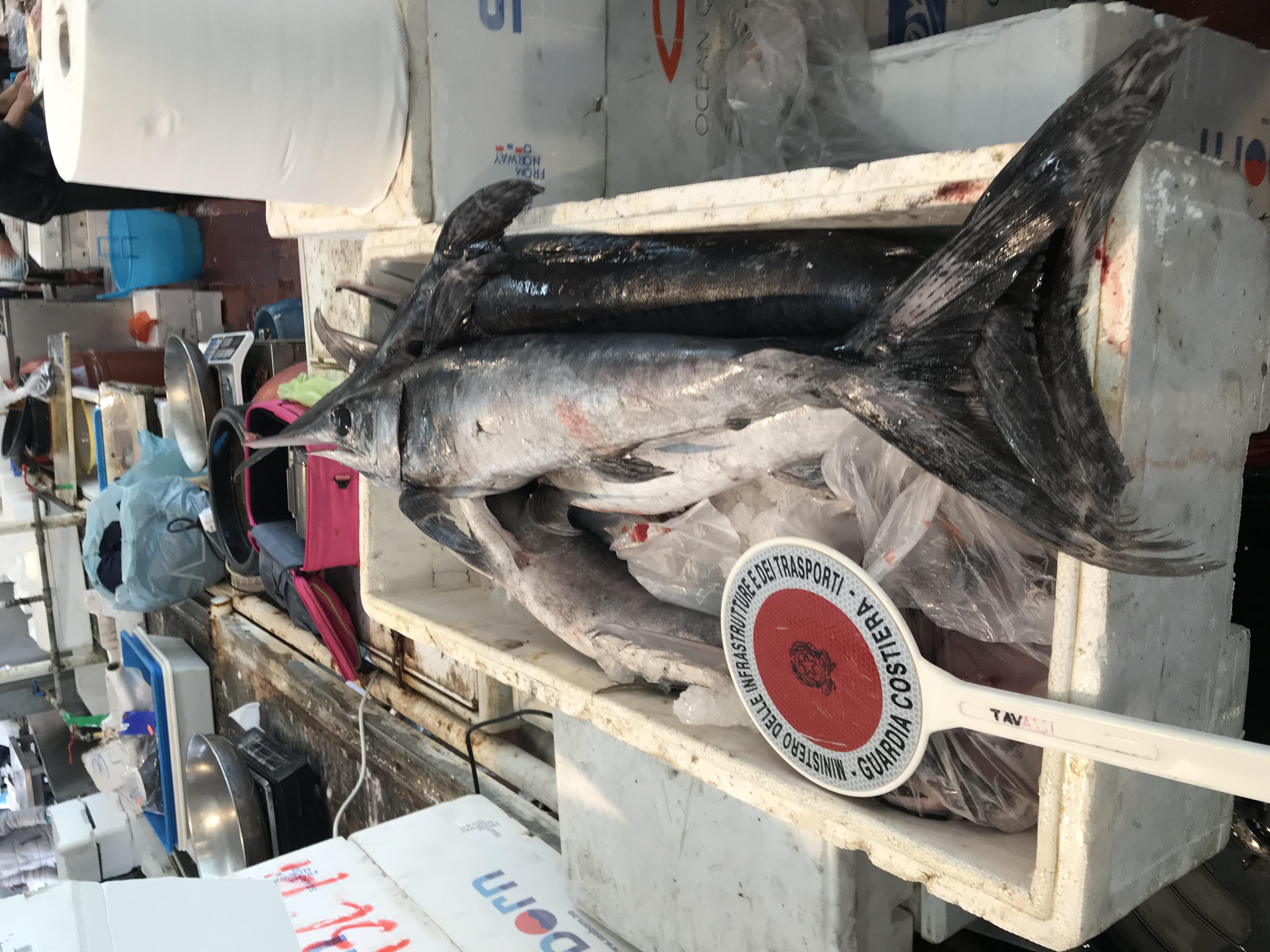 POZZUOLI/ Sequestrati 800 kg di pesce spada sotto misura dalla Guardia Costiera - LE FOTO